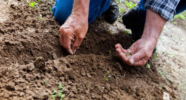 Shelloch-Planting-Advice